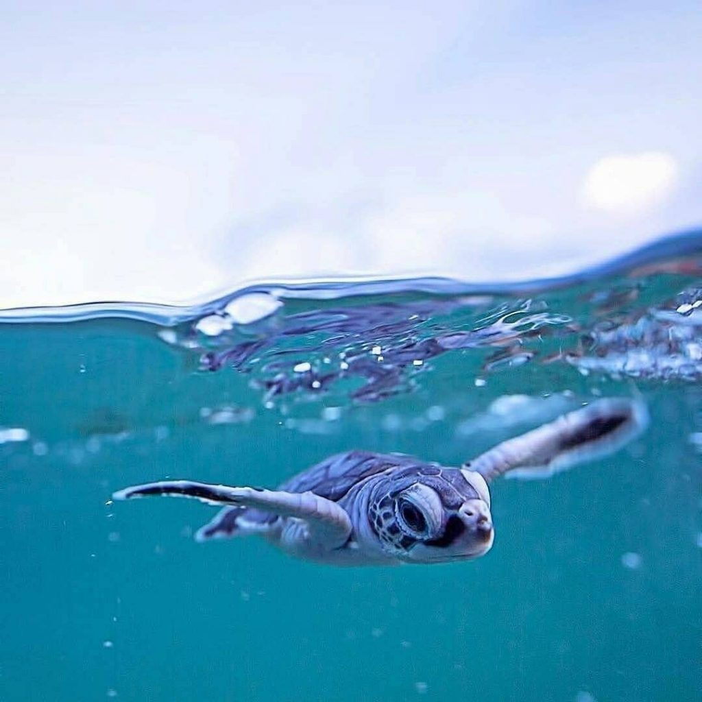 Taking Care of Our Oceans: A Scuba Diving for Beginners Must-Know