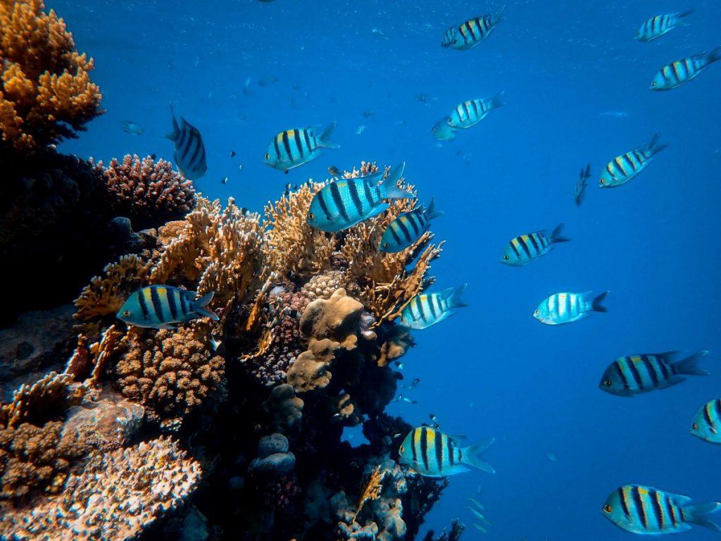 Raja AmpaT Diving