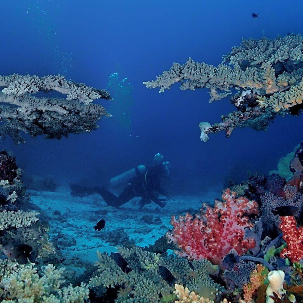 The Deep Wall: POS 2 Menjangan Island